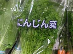 にんじん菜_アイキャッチ